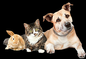 Pets, Vets, Animals Services & Supplies in Texas (TX) Hill Country